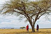 Two Masai men, Ngorongoro Conservation Area, Tanzania, East Africa.