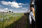 cuervo tequila train express around agave fields.