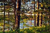 Seney wetlands in early summer, Seney NWR, Michigan, USA.