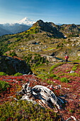 Backpacking through Tomyhoi Meadows in North Cascade National Park  Keep Kool Butte and Mount Baker dominate the horizon