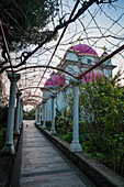 'Greek Orthodox Church with pink domes and gold crosses; Capernaum, Israel'