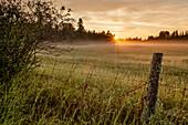 'Sunrise over dewy grass field; Thunder Bay, Ontario, Canada'