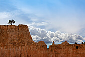 'A tree grows alone along the ridges of Bryce Canyon National Park; Utah, United States of America'