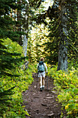 'Female hiker with poles on forest trail; Waterton, Alberta, Canada'