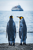 'Two king penguins (Aptenodytes patagonicus) looking at blurred ship; Antarctica'