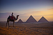 'A lone camel and rider stand in front of the setting sun with the great pyramids behind them; Giza, Egypt'