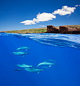 'A split view of spinner dolphin (Stenella longirostris) below and Puu Pehe or Sweetheart Rock off the island of Lanai above; Lanai, Hawaii, United States of America'
