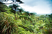 View over tropical rainforest from the Alexander Range Lookout, Daintree National Park, Queensland