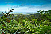 View to the mouth of the Daintree River from the Alexander Range Lookout, Daintree National Park, Queensland