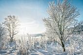 Nebel steigt im Gegenlicht empor, winterliche Stimmung an der Blau, Blautal bei Blaubeuren, Alb-Donau Kreis, Schwäbische Alb, Baden-Württemberg, Deutschland