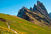 Trekking trail on the Seceda mountains with great views of the rocky peaks. Dolomiti, Trentino Alto Adige, Italy.