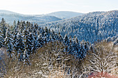 Winter landscape, forest with fir trees covered with snow, mountains, Harz, Sankt Andreasberg, Lower Saxony, Germany