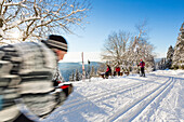 Skiing in a winter forest, racing, cross-country skiing, fir trees covered with snow, winter sport, Harz, Sankt Andreasberg, Lower Saxony, Germany