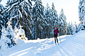 Women skiing in a winter forest, cross-country skiing, winter landscape, fir trees covered with snow, Ski area, Harz, MR, Sankt Andreasberg, Lower Saxony, Germany
