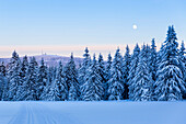 View to Brocken mountain with full moon, winter landscape, fir trees covered with snow, Harz, Sankt Andreasberg, Lower Saxony, Germany
