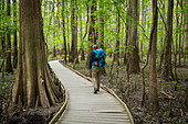 Male hiker embarks on a dayhike through the Congaree National Park just outside of Columbia, South Carolina. The Boardwalk Trail is the starting point for the vast majority of hikes within the park and offers sights of the bottomland forest.