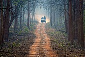 people in off-road vehicle driving on dusty forest track in Tadoba National Park, Maharashtra, India.