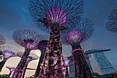 Singapore, Gardens By The Bay, Super Tree Grove and Marina Bay Sands Hotel, dusk.