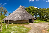 Chief´s House at Castell Henllys Iron Age Fort, Pembrokeshire Coast National Park, Pembrokeshire, Wales, United Kingdom, Europe.