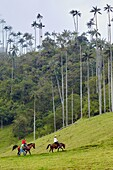 Tourists riding, Valle del Cocora, Salento, Quindio, Colombia, South America