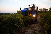 France, Bouches du Rhone, Puyricard, Route du Seuil, Chateau du Seuil wine domain, AOC Coteaux d' Aix en Provence, grape gathering