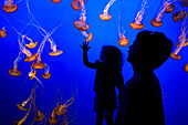 United States, California, Monterey Peninsula, Monterey, Cannery Row, Monterey Bay Aquarium, jellyfish pool, father and daughter