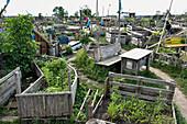 urban gardening at former Tempelhof Airport, Berlin, Germany