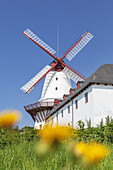 Windmill Dybbøl in Dybbøl near Sønderborg, Southern Denmark, Denmark, Scandinavia, Northern Europe