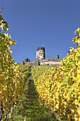 Vineyard underneath Burg Fürstenberg castle, Rheindiebach, Upper Middle Rhine Valley, Rheinland-Palatinate, Germany, Europe