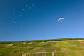 Paragliding above the vineyards, Mosel, Rhineland-Palatinate, Germany