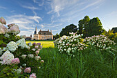 Hydrangea in the  park, Lembeck moated Castle and garden, Muensterland, North-Rhine Westphalia, Germany