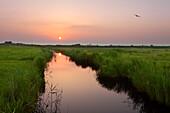 Sunrise in the nature reserve  Leyhoern, near Greetsiel, East Friesland, Lower Saxony, Germany
