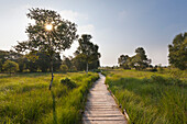 "Nature reserve ""Ewiges Meer"", East Friesland, Lower Saxony, Germany"