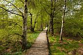 Nature reserve Schwarzes Moor, Rhoen, Bavaria, Germany