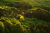 Mixed forest, Rhoen, Hesse, Germany