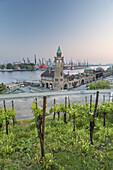 Vineyards above jetties of St.-Pauli-Landungsbrücken with tower Pegelturm, in the background port of Hamburg, Hanseatic City Hamburg, Northern Germany, Germany, Europe