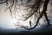 Young man balancing over the branch of a tree on a foggy autumn day, Allgaeu, Bavaria, Germany