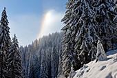 France, Haute Savoie, La Clusaz, Manigot, spruce forest at Col de la Croix Fry and phenomenon due to cold and moisture
