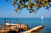 Croatia, Istria, Adriatic coast, coast near Umag