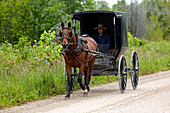 Canada, Ontario Province, Grey County, surrondings of Williamsford, Amish Community, man in horse-drawn carriage