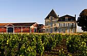 France, Gironde, Pomerol, Bordeaux vineyard, Chateau L'Evangile vine and wine storehouse, AOC Pomerol