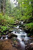 Torrent, nature reserve Hoellbachgspreng, Bavarian Forest National Park, Lower Bavaria, Bavaria, Germany