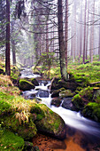 Torrent, Kalte Bode, Harz National Park, Saxony-Anhalt, Germany
