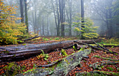 Deadwood, Rohrberg nature reserve, Spessart Nature Park, Lower Franconia, Bavaria, Germany
