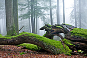 Deadwood, Spessart Nature Park, Lower Franconia, Bavaria, Germany