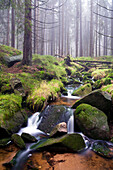 Stream at the foot of Brocken mountain, Harz National Park, Saxony-Anhalt, Germany