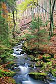 Creek of the Disbach in autumn, Rhoen Biosphere Reserve, Bavarian Rhoen Nature Park, Bavaria, Germany