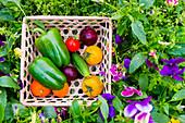Close up of basket of fresh vegetables on flowers