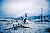 Desolate cold landscape, Yellowstone National Park, Wyoming, United States