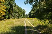 former Reichsautobahn, Third Reich, overgrown artery, deserted, motorway, freeway, traffic, infrastructure, Hitler, propaganda, Dreilinden, Berlin, Germany